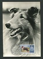 SAN MARINO MK 1957 HUNDE DOGS COLLIE MAXIMUMKARTE CARTE MAXIMUM CARD MC CM d7657