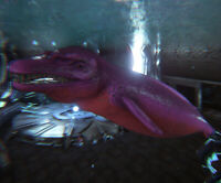 Ark Survival Evolved Xbox One PvE Water Boss 263-249 Basilosaurus Breeding Pair