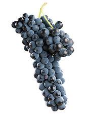 Alphonse Lavallee Grape French Dark Black Vine Grapes Seeds 10 PCS RARE!