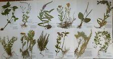 Herbarium 30 Pflanzen mit Wurzel