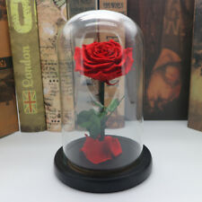 Beauty and the beast real preserved red rose SP