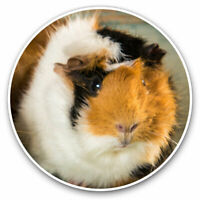 2 x Vinyl Stickers 7.5cm - Cute Fluffy Guinea Pig Animals Pets Cool Gift #8477