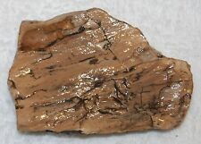 Old Stock specimen of Light Colored Petrified Wood Branch Log Forest white 7 oz.