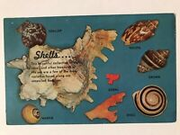 Beautiful Collection of Sea Shells and Coral Postcard