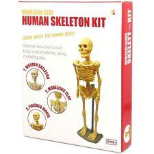 Kit modelo de Arcilla Modelado esqueleto humano Juguete De Ciencia