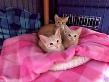 SPONSOR CREAMY KITTEN SISTERS HELP FEED SPAY FERAL CAT RESCUE Rec Color PHOTO
