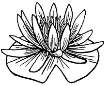 Unmounted Rubber Stamps, Flowers, Floral Stamps, Water Plants, Lily Pad, Flower