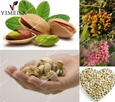 Nut tree Pistachio seeds 5 Pcs rare outdoor fruit tree seeds tropical plant seed