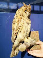TAXIDERMY Great OWL Bird of Prey Real Stuffed Mounted
