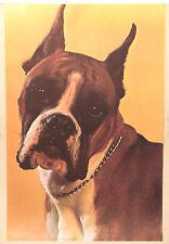 (PRL) CANE BOXER DOG PORTRAIT CHIEN VINTAGE AFFICHE POSTER PRINT ART COLLECTION