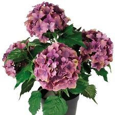 Purple Artificial Fake Inddors or Outdoors Garden Hydrangea Flower Plant