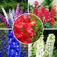 Mix Flower Seeds GIANT DELPHINIUM FLOWER SEEDS MIX /PERENNIAL 50Seeds+ AA