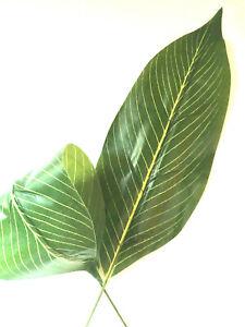 2 x Artificial Foliage Aspidistra Leaves Craft Greenery Flower Arranging