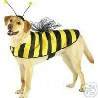 Casual Canine Bumble Bee Dog Halloween Costume   XS S M L XL