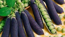 25+ Blue Podded Organic Pea Seeds Pisum sativum