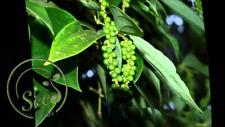 Seeds Genuine Fresh Carolina Reaper Pepper Heirloom Vegetable Natural Product