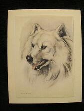 Dog Pet Sympathy Card w/envelope 5x4 Handmade Samoyed