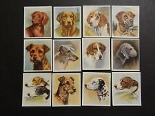 Cigarette Cards Dogs Godfrey Phillips Complete  Bind1#12