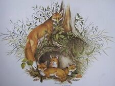 vintage 70s print RED FOX and CUBS by James Lockhart