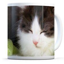 Cute Sleeping Kitten - Drinks Mug Cup Kitchen Birthday Office Fun Gift #15677
