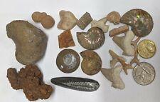 FOSSIL COLLECTION - Dinosaur Ammonite Shark Orthoceras Stingray Crynoid (#U310)