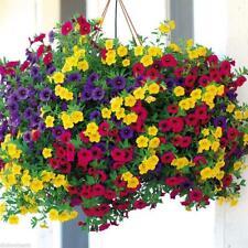 200Pcs Mixed Colors Hanging Petunia Flower Seeds Balcony Calibrachoa Bonsai V6N2