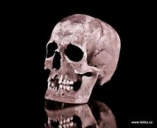 Human male skull replica - REAL SIZE, BRAND NEW