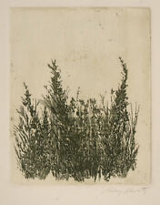 "Signed  1966 ""Wild Flower"" etching by Aubrey Schwartz"