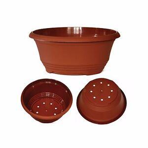 Tekucotta terracotta Bulb Bowls available in 5 sizes.  Bulbs, Alpines, Bonsai