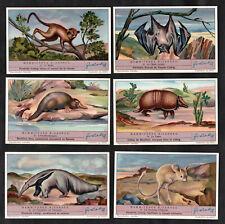 Liebig Strange Mammals Cards Set 1937 Anteater Platypus Bat Maki Armadillo Mouse