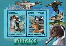 Antigua Barbuda-2014-Birds-Ducks