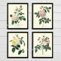 Unframed Botanical Print Set of 4 Antique White Pink Roses Flowers Home Wall Art