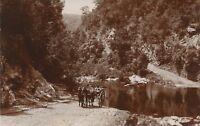 SOUTH AFRICA ca. 1910, superb mint RP postcard near GEORGE