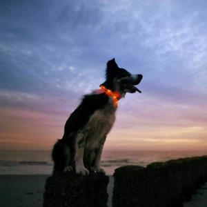 XS-XXL Leuchthalsband Hund USB Hundehalsband Leuchtend