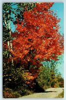 Vintage Postcard Greetings From Shadyside Ohio OH Red Maples
