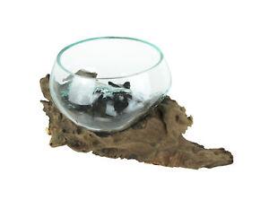 Molten Glass On Gamal Wood Root Decorative Bowl/Plant Terrarium