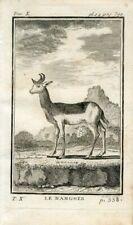 1769 ANTELOPE NANGNER Antique Copper Plate Engraving Print BUFFON