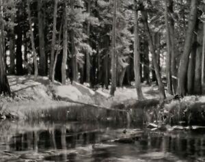 1921/72 Vintage ANSEL ADAMS Yosemite Pine Forest River Landscape Photo Art 11X14