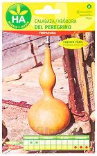 Calabaza del Peregrino - 20 Semillas (4 g) - Sobre Hermético HA