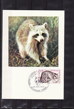carte  1er jour  faune  raton laveur de la Guadeloupe  Basse Terre     1973