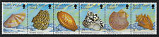 BRITISH VIRGIN ISLANDS:1999 Sea Shells-no imprint date SG1026-31A MNH