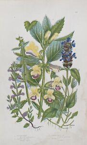 ANTIQUE Anne PRATT 1st ED 1860 BOTANICAL PRINT Flowering SKULLCAP Self Heal BALM