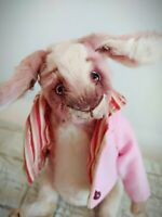 Teddy Rabbit Brunee   OOAK Artist Teddy by Voitenko Svitlana.