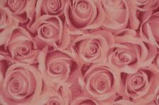Jersey mit Rosen Blüten rosa Baumwolle 50 cm x 145 cm Nähen Stoff