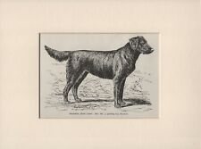 FLAT COATED RETRIEVER OLD ANTIQUE 1895  DOG PRINT READY MOUNTED
