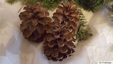 20 Stück Tannenzapfen Kiefernzapfen ca. 8 cm,  Ø 6 cm