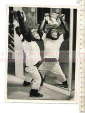 Original Pressefoto: Dinky Chimpanzee veut a Rubber Mask make me Prettier?