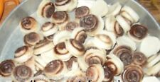 PARASOY.36 SMALL CINNAMON BUN  WAX CANDLE TARTS/MELTS LOT/ YOU PICK SCENT