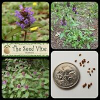 50+ SELF HEAL PLANT SEEDS (Prunella vulgaris) Purple Flower Medicinal Herb Tea