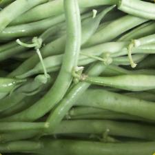 120 Landreth Stringless Green Bush Bean Seeds - Everwilde Farms Mylar Packet